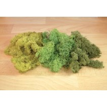 Expo Lichen Mixed Green 125g 59108