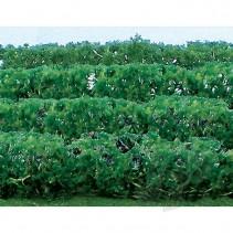 JTT Green Hedges HO Scale JTT95515