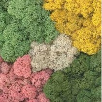Lichen 015.050 Total Mix 50g